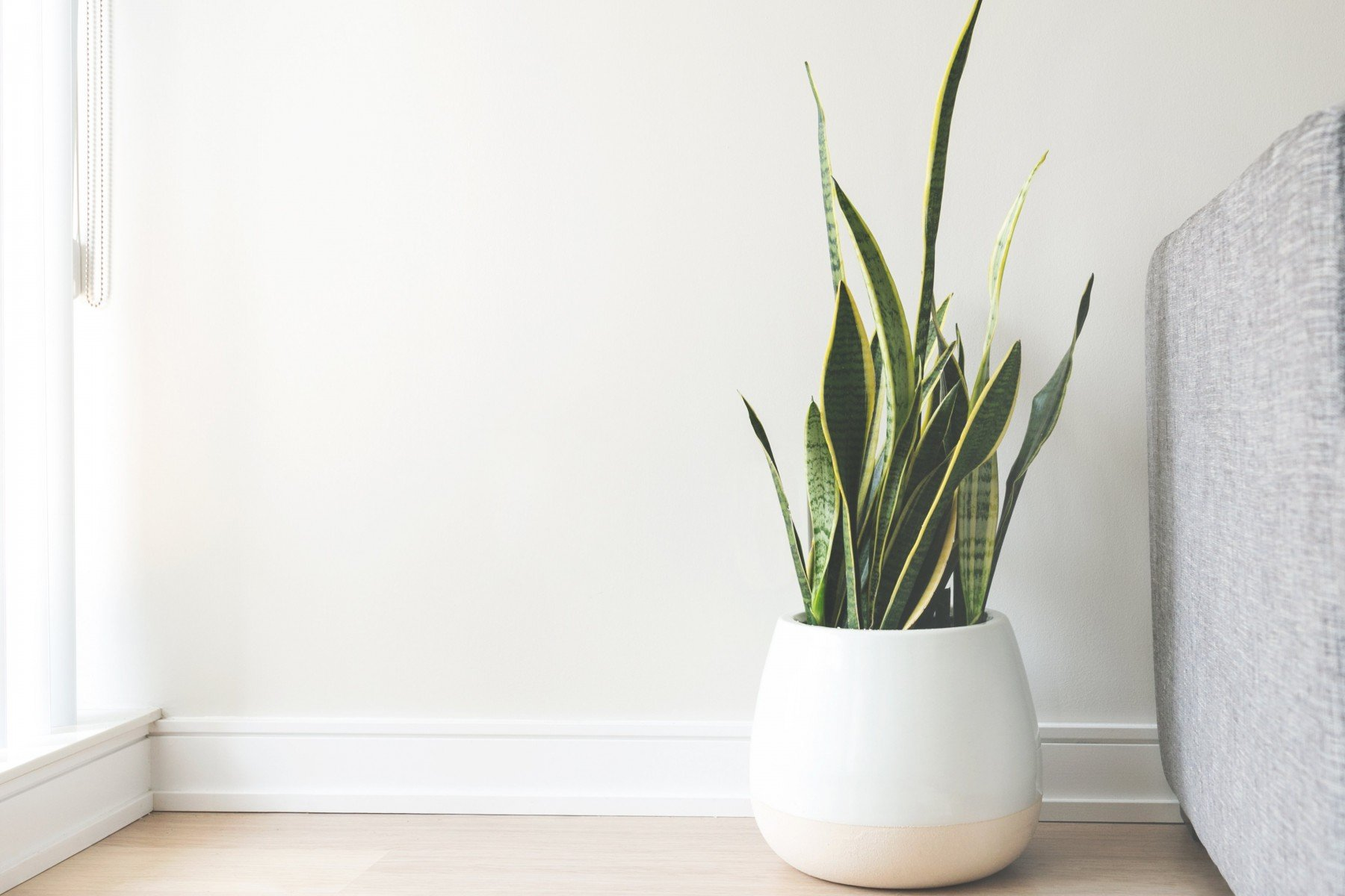 minimalist plant - Japanese bathroom